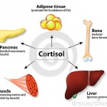 Cortisol and Cycling – The Stress Hormone