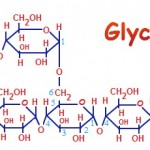Is Glycogen a Carbohydrate?